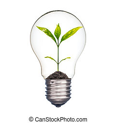 Small plant in a lightbulb