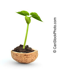 Small plant in a nutshell