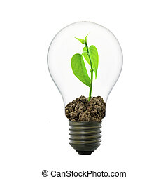 Small plant in light bulb, conservation concept