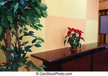 Small plant in office lobby - Small plant against an orange ...