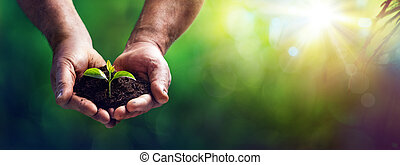 Small Plant In Old Hands - Care And Protection Concept