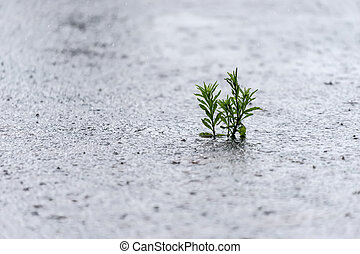Small plant in the rain