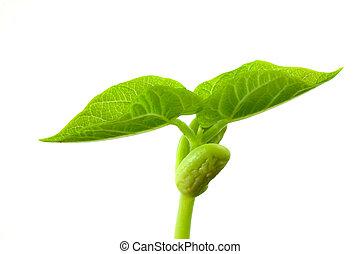 Small plant