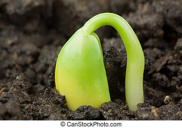 Small plant of soy