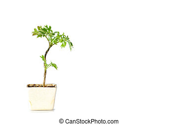 Small plant pot on white background