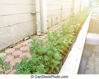 Small plant trees in garden