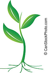 Small Plant - Vector illustration of green plant with leafs...