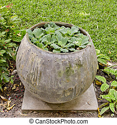 small plants are planting in water jar in the garden.
