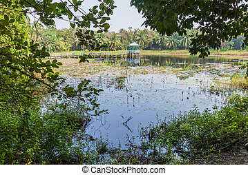 Small pond in Harbaria eco park in Sundarbans, Banglade