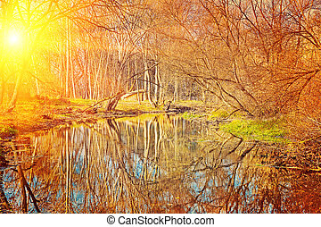 small pond in the autumn park at sunset instagram stile