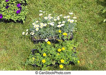 small pots of plants for planting in the garden