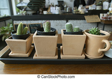 Small pots with dwarf cactus on a wooden table in a coffee shop