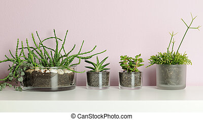 small pots with succulent plants