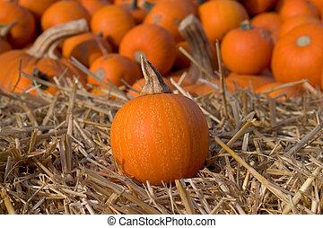 Small Pumpkin on Hay