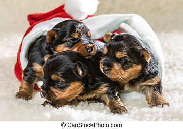 Small puppies on a white carpet