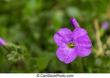 small purple flower close-up on a blurred background.