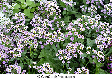 Small Flowers In The Colors Purple And White