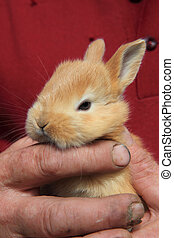 small rabbit in human hands
