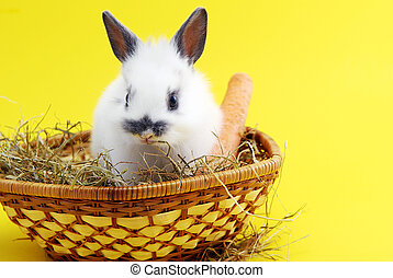 small rabbit isolated on yellow background