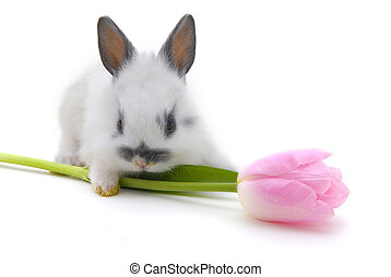 small rabbit with flower