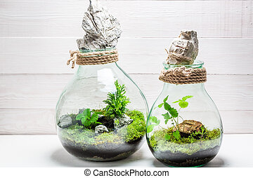 Small rain forest in a jar, save the earth idea