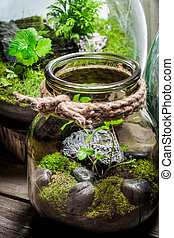 Small rain forest in a jar, save the earth concept