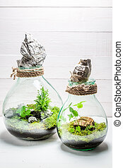 Small rain forest in a jar with self ecosystem