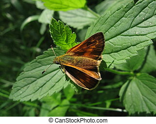 Small red butterfly on leaf