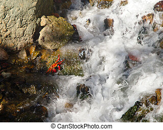 Small red crab in a water stream