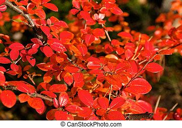 Small Red Fall Leaves