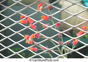 Small red flowers from succulents on steel mesh wall.