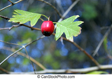 small red fruit - Creative design of small red fruit