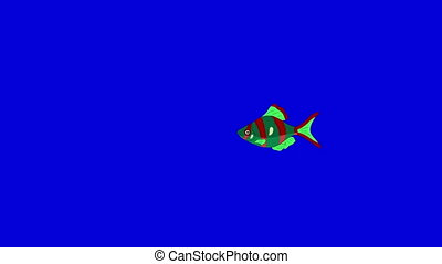 Small Red-green Aquarium Fish Chroma Key - Small Red-green...