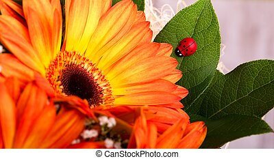 Small red ladybug on leaf next to gerbera bloom