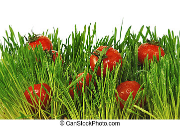 Small red tomatoes in a green grass
