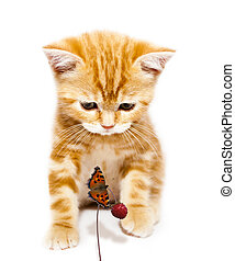 kitty and butterfly - small redhead kitty and butterfly on...