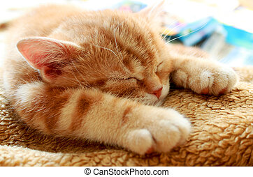 kitty - small redhead kitty sleeps on soft blanket