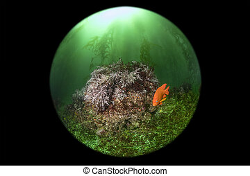 Small reef in California's Channel Islands