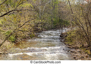 Small River Curving Through Spring Forest
