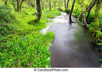 Small river in a green forest