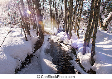 small river in the winter forest