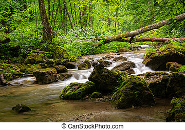 Small river in the woods on a rainy day in spring, Austrian ...