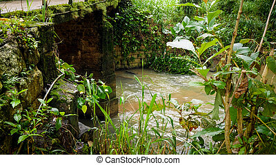 Small river stream flowing through tropical jungle forest