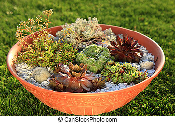 Small rock garden - Beautiful rock garden cultivated in...