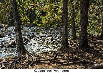 Small rocky stream in Canada.