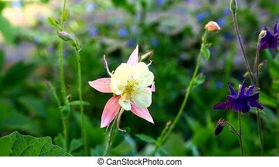Small rose campanula at summer windy sunset
