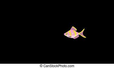 Small Rose-yellow striped Aquarium Fish Alpha Matte - Small...