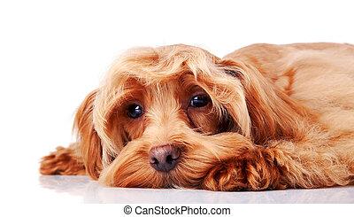 Small sad decorative doggie. - Small doggie. Decorative...