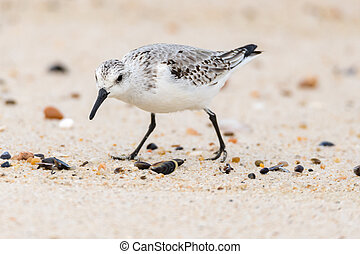 Small Seagull on Beach Sand