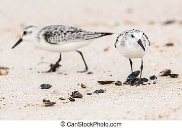 Small Seagulls on Beach Sand
